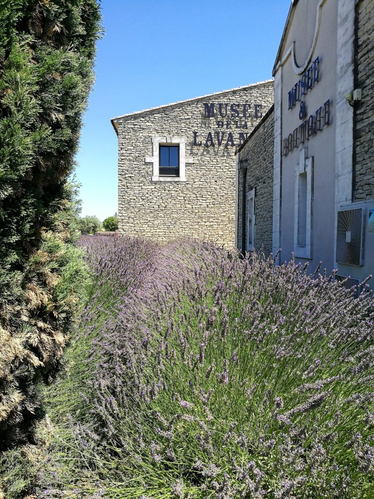 10 places you can´t miss in Provence - Lavender Museum