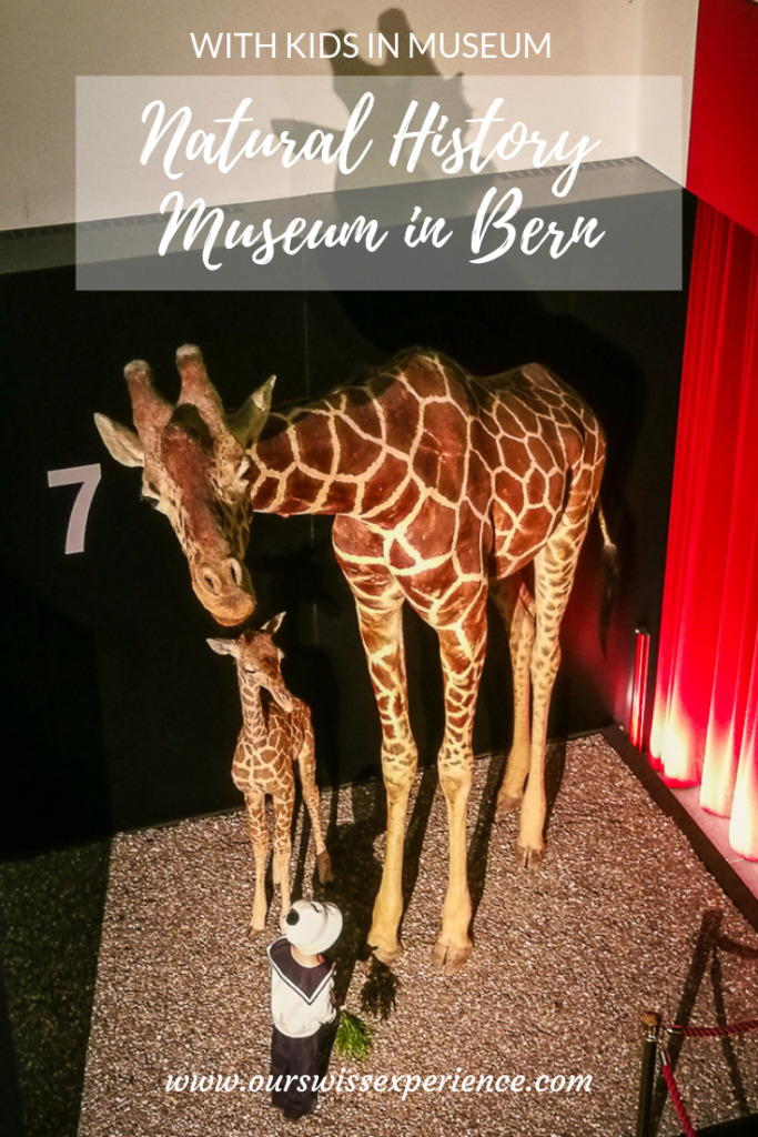 Natural History Museum in Bern visit
